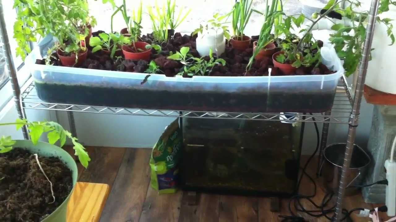 Building a Working Aquaponics System