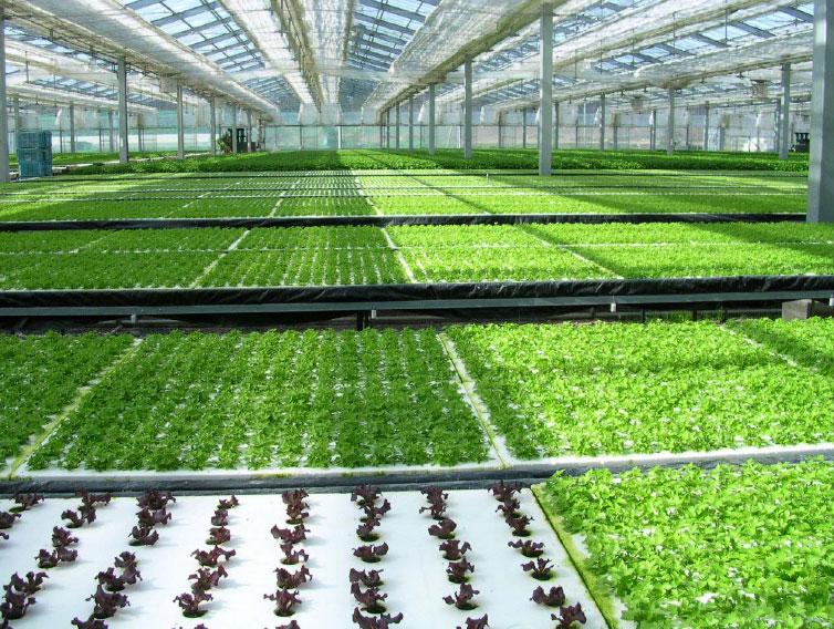 Выращивание овощей в зимнее время 83